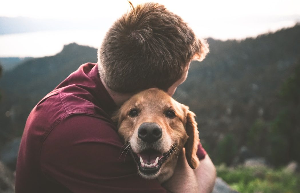 How to Stay Safe Around Your Pet Animals